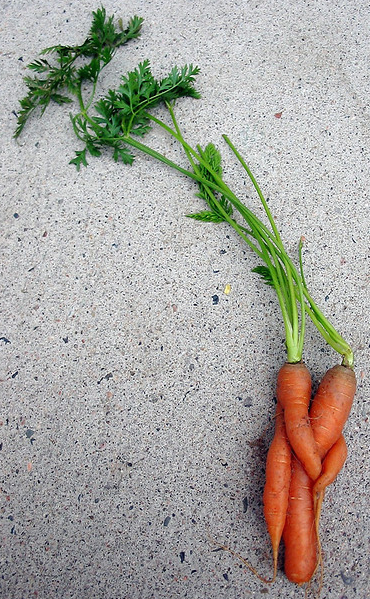 Even carrots need a cuddle sometimes.